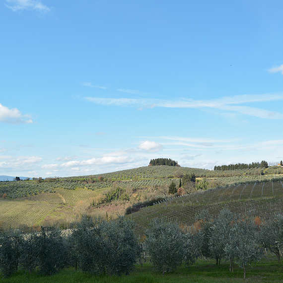 YOUR HOLIDAY IN TUSCANY
